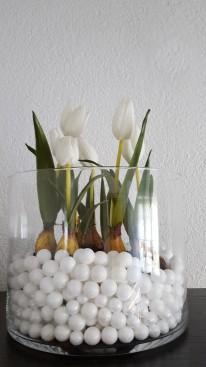 Tulpen im Glas - 1